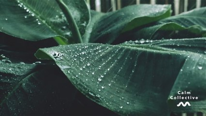 Calm Collective - Umbrella Raindrops