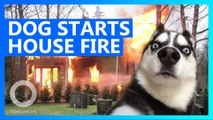 Dog nearly burns the house down after turning on microwave