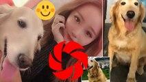 Une propriétaire d'un animal de compagnie dépense 41 000 £ pour faire cloner son Chien bien-aimé