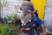 Ce chat adore faire de la moto