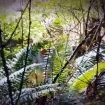 Treehouse Masters S04E01 Nelson Family Treehouse