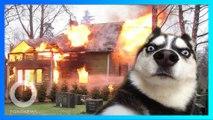 哈士奇誤啟微波爐 引發火災滿廚房煙