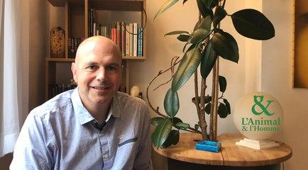 Interview 2 de Michel Gauthier Clerc : La crèche des bébés manchots