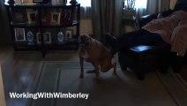 Ce chien se gratte le derrière sur les pieds de son maître !