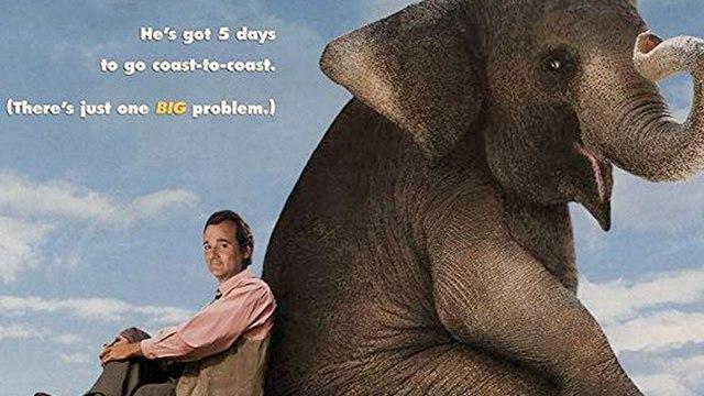 Larger Than Life Movie (1996) Jerry Adler, Bill Murray, Richard Alan Baker