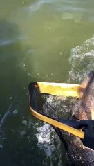 Commercial menhaden boats are killing red drum in the Gulf of Mexico