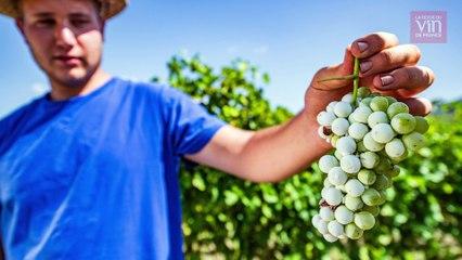 """""""Vendanges Solidaires"""" vient en aide aux vignerons sinistrés"""