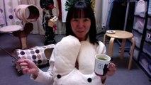 【猫の多頭飼い】ねこ姉さんふじ子のおしゃべり報告会♪ 2019.12.12