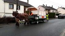 Charleville Mézières : un cheval ardennais pour la collecte des déchets