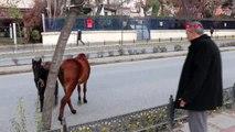 Edirne'de başı boş atlar trafiği karıştırdı