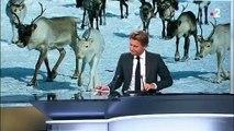 Laponie : les rennes menacés par le réchauffement climatique