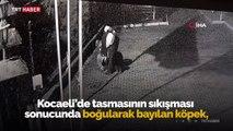 Tasması sıkışarak boğulan köpeği vatandaşlar kurtardı