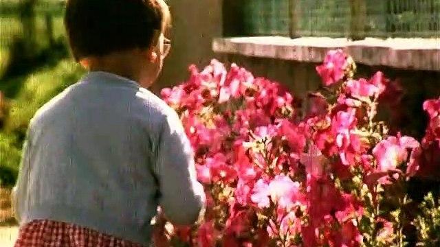 Film fleurissement Lombron 1966