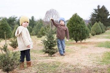 Weihnachtsbaum: Natürlich, künstlich oder keinen?