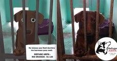 Ces bandes dessinées touchantes racontent l'histoire de chiens accueillis dans un refuge