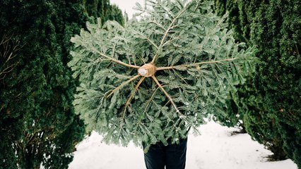 The Science Behind Growing a Perfect Christmas Tree