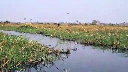 Ils se font pourchasser par un crocodile sur leur Kayak