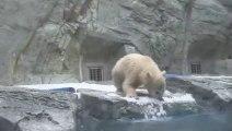 Cette maman ours se jette pour rattraper son petit tombé à l'eau