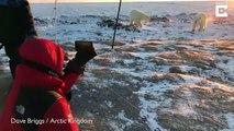 Ces bébés ours polaire curieux rendent visite à des photographes au canada