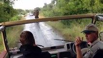 Ils échappent à un éléphant en colère en marche arrière !