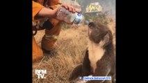 Un pompier donne de l'eau à un koala assoiffé tandis que les incendies continuent en Australie