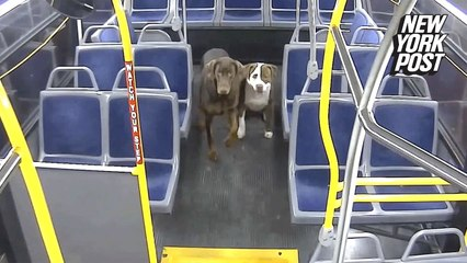 Holiday miracle! Bus driver reunites lost dogs with family