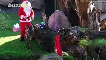 Santa Makes Sure Spanish Zoo's Animals Have a Great Christmas