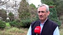Trabzon karadeniz'deki orman yangınlarında 'kuraklık' etkisi