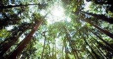 Sur Youtube, un vidéaste récolte 20 millions de dollars afin de planter 20 millions d'arbres