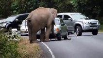Cet éléphant a décidé de s'asseoir sur une voiture...