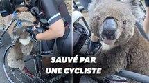 En Australie, ce koala assoiffé secouru par une cycliste