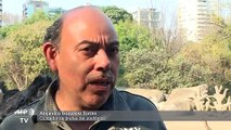 Zoológico mexicano presenta a una jirafa bebé