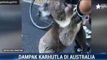 Momen Pesepeda Beri Minum Koala yang Kehausan