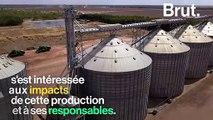 La culture de soja, un désastre écologique au Brésil