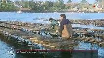 Huîtres : livraison express, de la mer à l'assiette