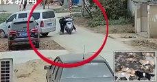 Un restaurateur chinois tue huit chiens avec une arbalète pour les servir à ses clients