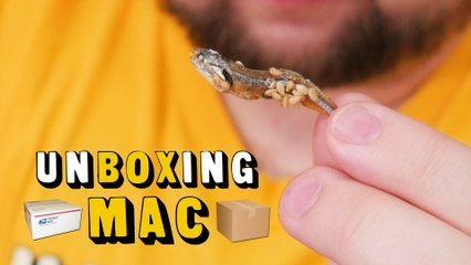 UnBoxing Mac 32: Japanese Goodies and Our Family 4 Cheese
