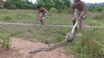 Python Snake  Using net And Catch Big Snake |How to Snake Catch Video, Snake  Video
