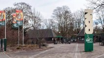 Fire Kills Chimpanzees, Orangutans, Gorillas Inside German Zoo