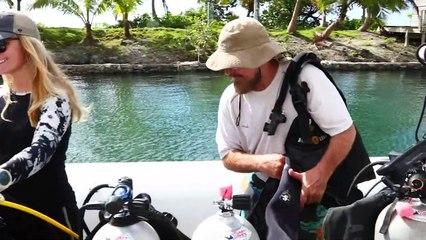Experience the Best Underwater Shark Adventure