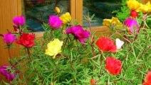 कही दिख जाये आपको ये पौधा तो चुपचाप रख ले सोने से भी महंगे है इसके फायदे । नोबजी के पौधे के फायदे । विटामिन E कैप्सूल के फायदे और नुकसान | vitamin e benefits and Side effects In Hindi | skin whitening treatment at home | Gora hone ka tarika| Shruti Gupta