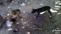 Monkey vs dog | monkey fight with dog | very funny video