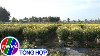 Hoa kieng Tet trung mua duoc gia nong dan Can Tho phan khoi