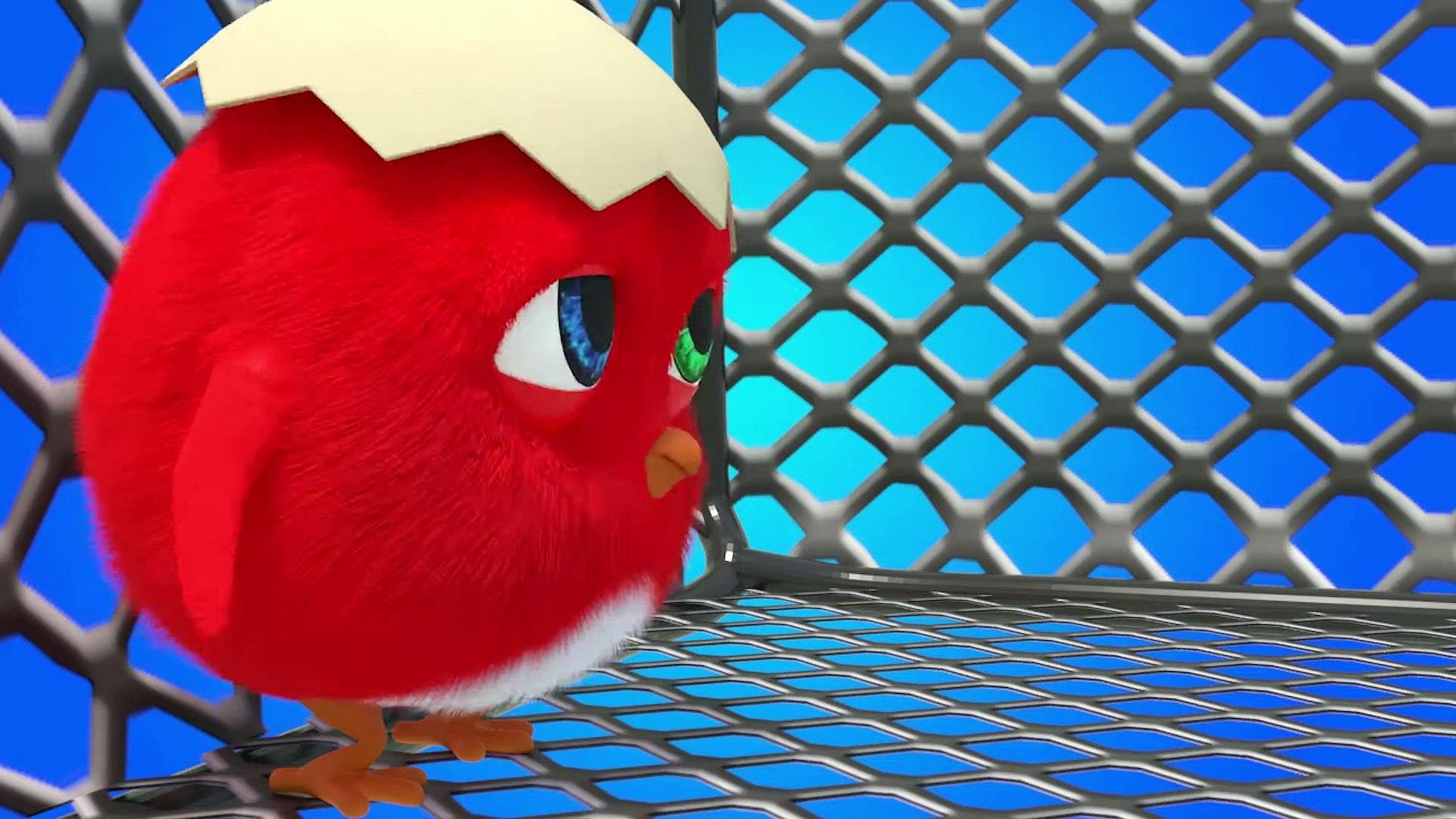 CucKoo Cartoon  Cuckoo Chicken 2020 - Part 11 Drôle de bande dessinée pour les enfants 2020