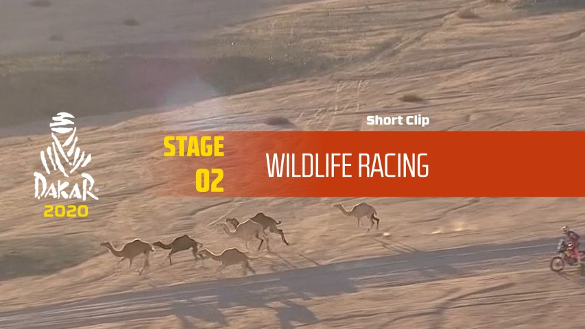 Dakar 2020 - Étape 2 / Stage 2 - Wildlife Racing