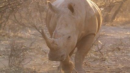 Safari Tourism: Paying to Kill