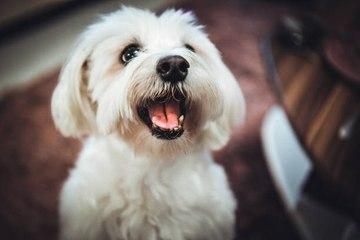 Tener un perro alargaría tu vida