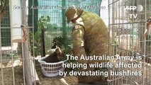 Australian army helps wildlife affected by bushfires