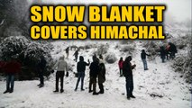 Himachal Pradesh: Snowfall in Shimla & Kufri, tourists rejoice