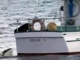 Ce chien a un nouveau meilleur pote... une orque